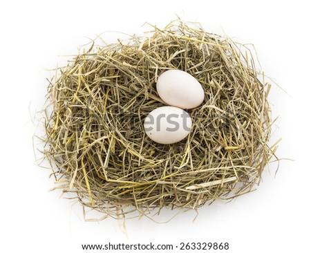 duck egg in nest - stock photo