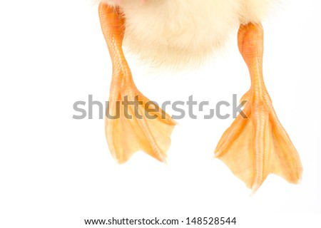 Duck feet close-up macro - stock photo
