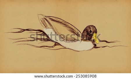 Duck floating on the water, pencil drawing - stock photo