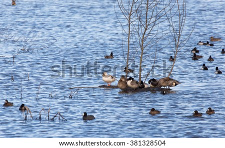 Duck pond, Vancouver BC Canada - stock photo