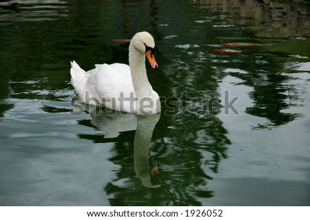 Duck swimming with reflection - stock photo