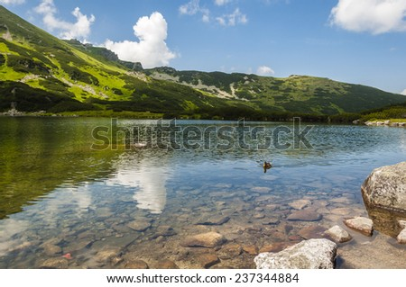 Duck swims in the pond in the mountains in Poland