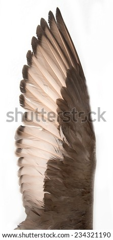 duck wings on a white background - stock photo