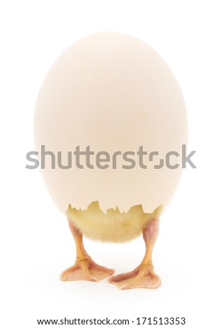 Duckling in a shell standing on white background
