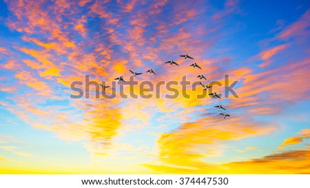 Ducks flying during a sunset - stock photo