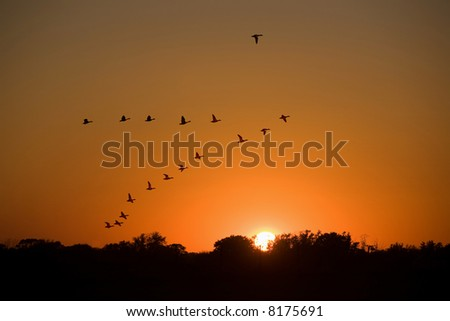 Ducks flying to the sunset.