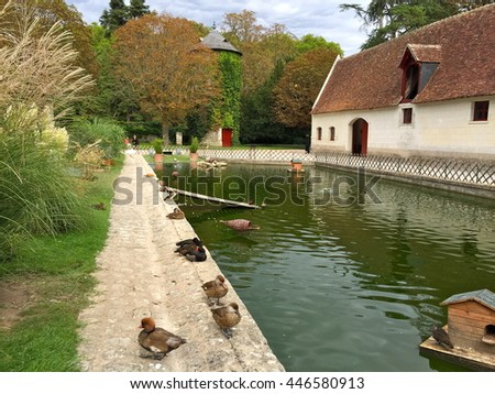 Ducks in front of an English-style farm house