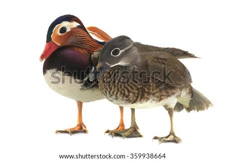 ducks of tangerine on a white background. studio - stock photo