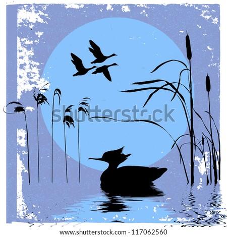 ducks silhouette on sunset background - stock photo
