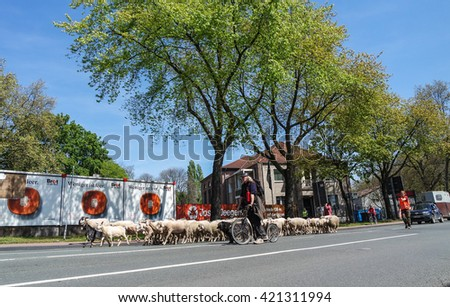 DUISBURG / GERMANY - MAY 05 2016 :Flock of sheep walking through the city