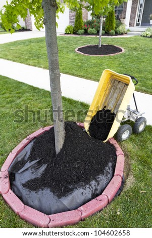 Dumping Mulch around the trees and shrubs, yard maintenance is fun. Weed barriers are very useful. - stock photo