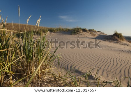 Dune grass and ripples in sand in morning light