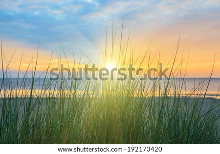 Dune grass at beach with dramatic sky during sunrise  - stock photo