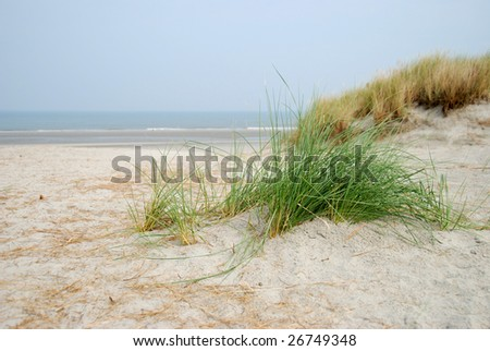 Dune grass at the beach by Ameland - stock photo