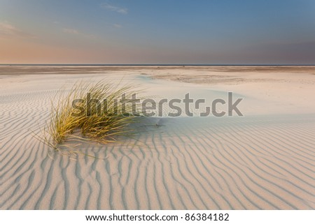 Dune-grass on the beach - stock photo
