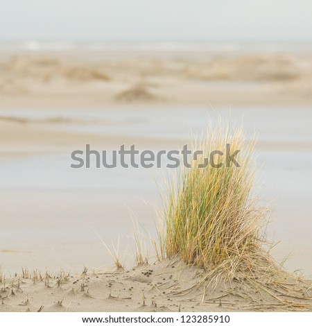 Dune-grass on the beach, Northsea Holland, Ameland - stock photo