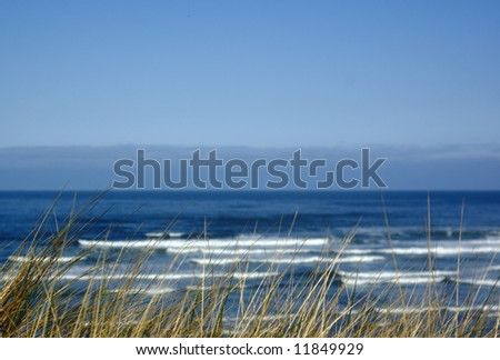 Dune grass with ocean surf in background