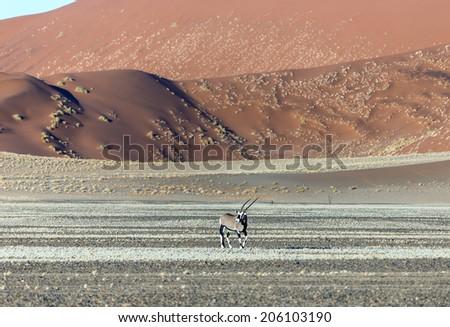 Dune in Sossusvlei plato of Namib Naukluft National Park - Namibia, South Africa - stock photo