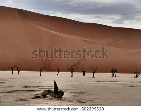 dune landscape in Namibia