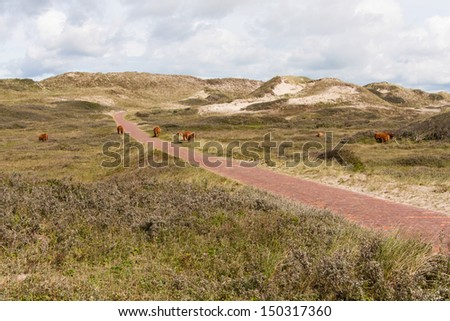 dune landscape in the Netherlands - stock photo