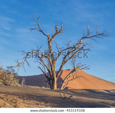 Dunes and dead tree on the Sossusvlei plato of the Namib Naukluft National Park - Namibia, South Africa