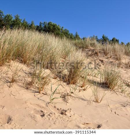 dunes Baltic Sea coast - stock photo