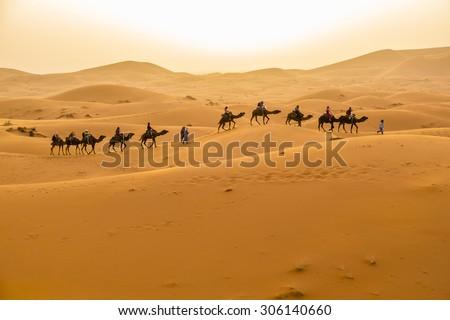Dunes Erg Chebbi near Merzouga, Morocco -Camels caravan during a tour into the erg at sunset - stock photo
