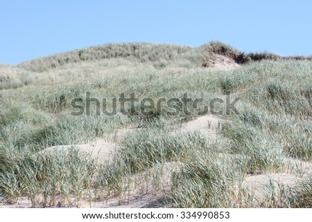 Dunes on the North Sea in the Netherlands
