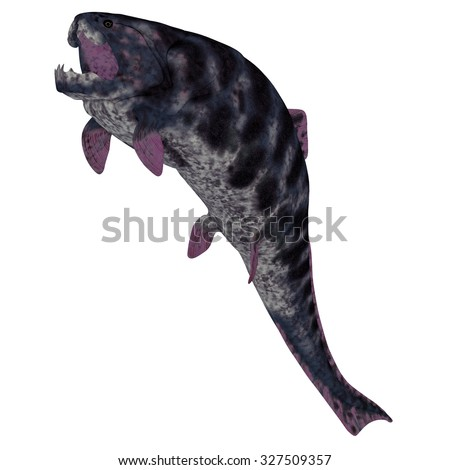Dunkleosteus Fish on White - Dunkleosteus is a Devonian prehistoric fish that lived in the seas of North America, Poland, Belgium and Morocco.