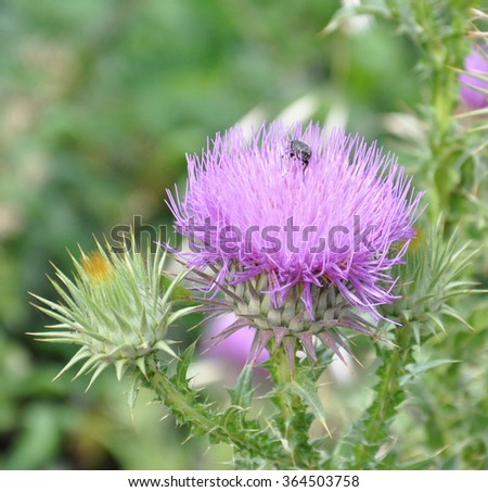 Durdock flowers in nature - stock photo