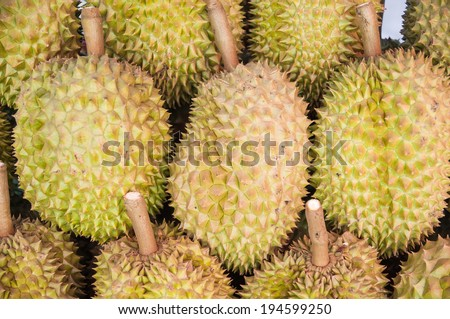 Durian, king of fruit, famous fruit in Thailand,Durain delicious