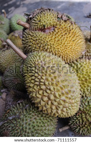 Durian - Tropical Fruit