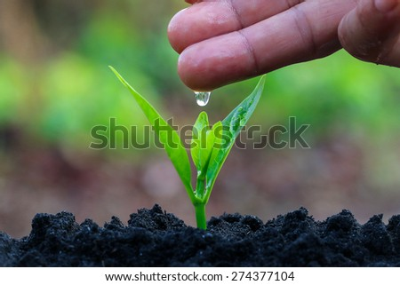 During the tree planting with seedlings and watering. Keep trees healthy When added, would help reduce global warming. - stock photo