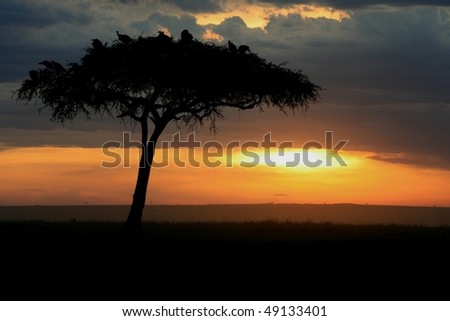Dusk in Kenya's Amboseli - stock photo