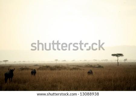 Dusk in the Masai Mara Reserve (Kenya) - stock photo