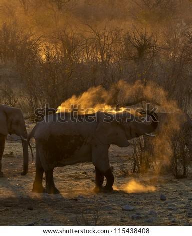 Dust Bath in the Evening Sunlight - stock photo