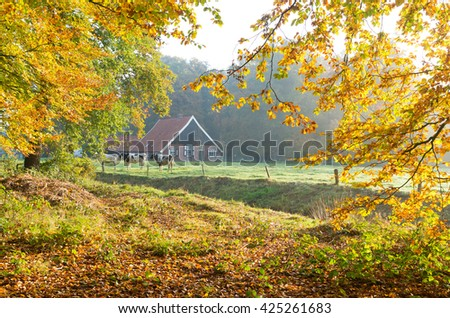 dutch farm with cows in an autumn landscape