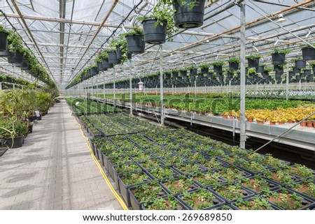 Dutch Garden center selling plants in a greenhouse - stock photo