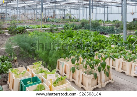 Dutch Greenhouse with several small community allot gardens