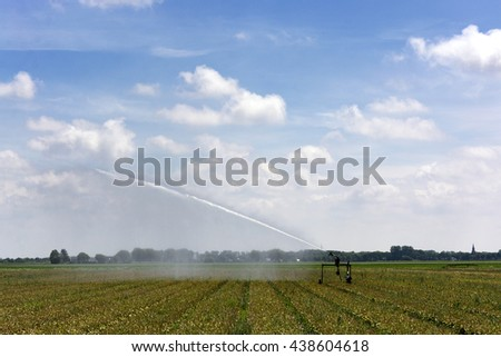 Dutch landscape with overblown bulbs, irrigation, blue sky, clouds, rural environment - stock photo