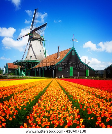 dutch traditional windmill  - orange tulips field leading to windmill, Netherlands, retro toned - stock photo
