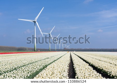 Dutch wind turbines behind a field of white tulips - stock photo