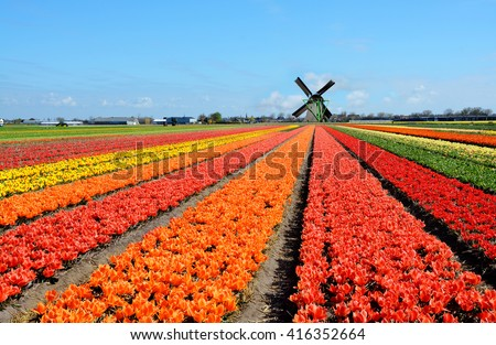 Dutch windmill and colorful tulips flowers in Holland, Netherlands - stock photo