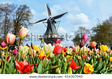 Dutch windmill and colorful tulips in spring garden of flowers Keukenhof, Holland, Netherlands. Focus on flowers - stock photo