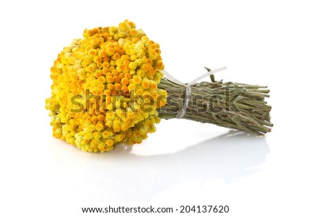 Dwarf everlast flowers bouquet isolated on the white background - stock photo