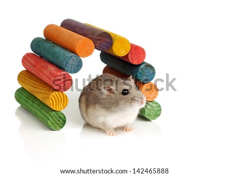Dwarf Hamster and Colourful Wooden Tunnel - stock photo