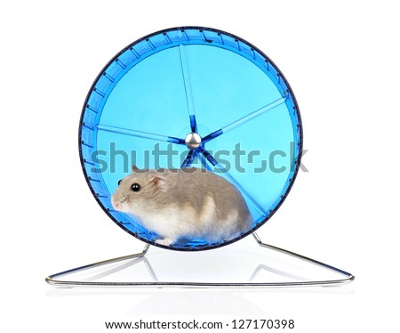 Dwarf Hamster in Blue Exercise Wheel - stock photo