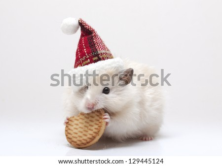 Dwarf hamster with christmas red hat on white background - stock photo
