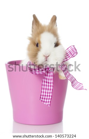 Dwarf rabbit with pink gift bow isolated on white - stock photo