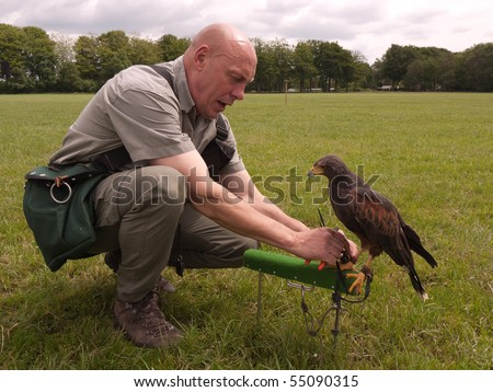 DWINGELOO - JUNE 13: Falconer attached a transmitter to the feet of a falcon to locate the animal when he's lost June 13, 2010 in Dwingeloo, the Netherlands. - stock photo